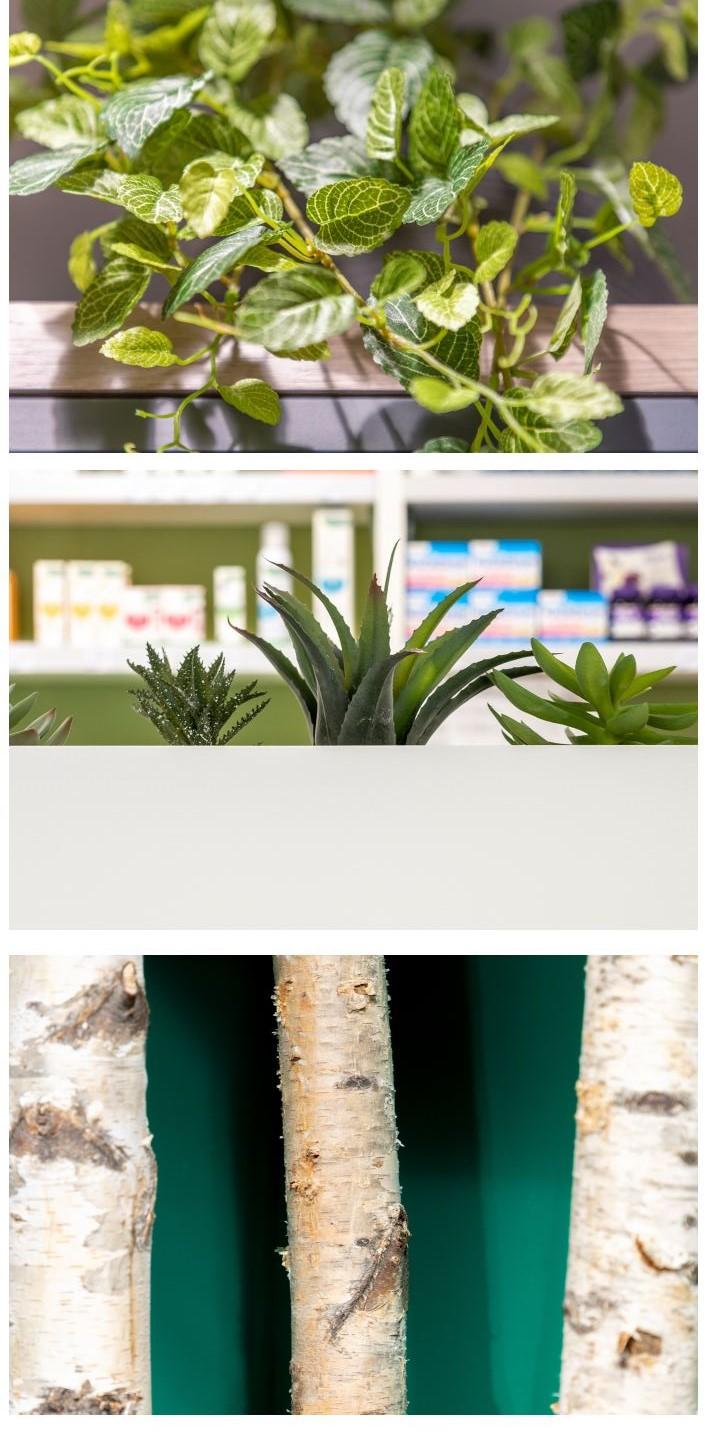 Le rewdiling : l'art de végétaliser votre pharmacie